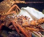 Lobster, Crab Restaurant, Rome, Italy, Europe