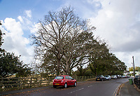 BNPS.co.uk (01202) 558833. <br /> Pic: CorinMesser/BNPS<br /> <br /> Pictured: The two dea oak trees at Whitecliff Road in Poole, Dorset. <br /> <br /> Police have launched an investigation into allegations a wealthy homeowner has killed two 'magnificent' oak trees because they blocked their sea views.<br /> <br /> The 70ft tall mature specimens have had holes drilled into their trunks and poison poured inside in a 'disgraceful' act of sabotage. <br /> <br /> The two trees stand on the edge of a recreation ground between Poole Harbour, Dorset, and a cluster of luxury homes that sell for between £2m to £3m.