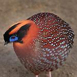 SI ZOO BIRDS