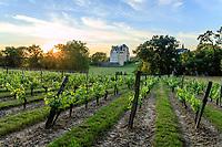 France, Maine-et-Loire (49), Brissac-Quincé, château de Brissac, la vigne des cinq siècles et le château le soir