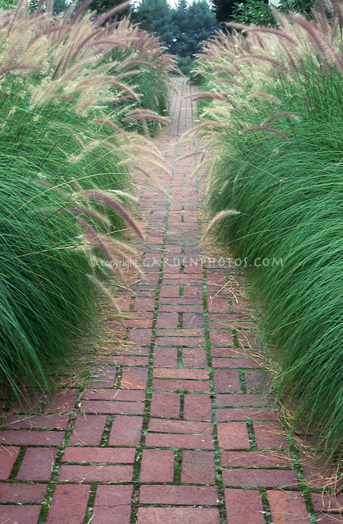 Ornamental grasses lining both sides of brick walkway in garden, hedge, Pennisetum alopecuroides mirrored on each side to form an allee hedging creating boundaries on either side.