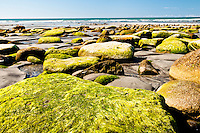 Moss covered rocks on Carters Beach in Westport - Buller Region, Central West Coast, New Zealand