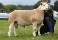 Kelso Ram Sale 2018<br /> Lot 2130       texel 10,000gns J Watson, Brijon<br /> ©Tim Scrivener Photographer 07850 303986<br />      ....Covering Agriculture In The UK....