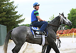June 5, 2015: Belmont Stakes contender Frosted, trained by Kiaran McLaughlin, leaves the track after his morning gallop at Belmont Park, Elmont, NY. Joan Fairman Kanes/ESW/CSM