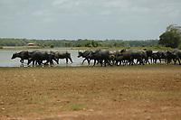 Localizada no norte do Pará, em uma área em que nem os pescadores sabem dizer onde termina o rio e começa o mar, a ilha concentra o maior rebanho de búfalos do Brasil. De acordo com a Pesquisa da Pecuária Municipal (PPM), do IBGE, o Pará contava com cerca de 520 mil cabeças