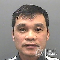 """Pictured: Toan Van Nguyen<br /> Re: The ringleaders of a Vietnamese crime gang have been jailed after police seized 2.5 tonnes of cannabis worth about £6m in raids across south Wales.<br /> A total of 21 people have been sentenced in a case going back to 2017 after dozens of cannabis factories were uncovered across the region and beyond.<br /> One of the defendants initially claimed to be 14 years old, but police proved he was actually aged 26.<br /> The gang leaders were sentenced at Merthyr Tydfil Crown Court on Friday.<br /> Bang Xuan Luong, 44, was sentenced to eight years in prison. His partner, 42-year-old Vu Thi Thu Thuy, was jailed for six years and Tuan Anh Pham, 20, who was described in court as the """"IT Man"""", received five years.<br /> An investigation into a cannabis factory in the Cynon Valley led officers from South Wales Police's Force Intelligence and Organised Crime Unit (FIOCU) to a string of others across south Wales, Gwent and Dyfed-Powys force areas."""