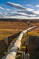 Trans Alaska Oil Pipeline traverses the Arctic tundra, Alaska.