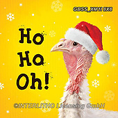 Sandra, CHRISTMAS ANIMALS, WEIHNACHTEN TIERE, NAVIDAD ANIMALES, paintings+++++,GBSSXM1I8X8,#xa#