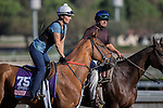 OCT 29 2014:Top Decile, trained by Al Stall Jr., exercises in preparation for the Breeders' Cup Juvenile Fillies at Santa Anita Race Course in Arcadia, California on October 29, 2014. Kazushi Ishida/ESW/CSM