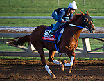 October 27, 2014:  Mico Margarita, trained by Steve Asmussen, exercises in preparation for the Breeders' Cup Xpressbet Sprint at Santa Anita Race Course in Arcadia, California on October 27, 2014. Scott Serio/ESW/CSM