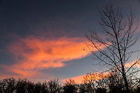 A winter landscape of leafless trees against blue sky and sunset orange clouds with two leaves clinging, defying gravity.