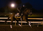 Swiss Skydiver, trained by trainer Kenneth G. McPeek, exercises in preparation for the Breeders' Cup Distaff at Keeneland Racetrack in Lexington, Kentucky on November 3, 2020.