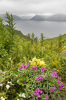 Wildflowers on Amaknak Island, overlooking UnAlaska Bay, Aleutian Islands, Alaska