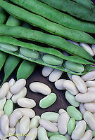 HS30-133x  Bean - shell beans - Cannellini variety