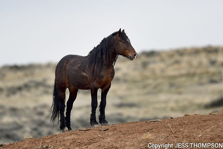 Wild Horse, McCullough Peaks, Wyoming