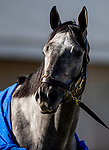 November 2, 2020: Essential Quality at Keeneland Racetrack in Lexington, Kentucky on November 2, 2020. Alex Evers/Eclipse Sportswire/Breeders Cup