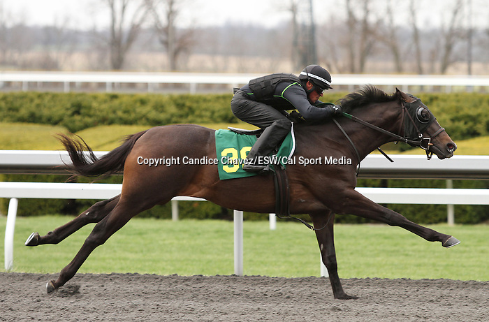 April 03, 2014: Hip 39 War Front - Sister Marilyn consigned by Niall Brennan worked 1/8 in 10:2.  Candice Chavez/ESW/CSM
