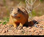 Utah Wildlife