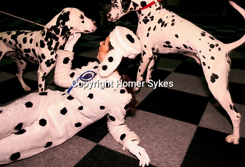 Solihull, Warwickshire. 1991<br /> Two Dalmatians eyeball each other, while Katherina a promotions girl for Battersea Dogs Home pretends that she is a Dalmatian bitch, as she tries to calm the situation down.