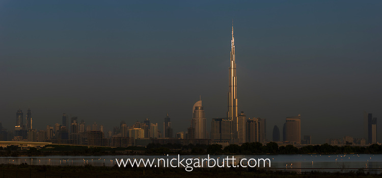 Greater Flamingos (Phoenicopterus roseus) feeding in lake at sunrise at Ras Al Khor Wildlife Sanctuary (Ramsar site), with the Dubai skyline in the background and the first rays of the sun catching the Burj Khalifa (the world's tallest building at 829.8m). Dubai, United Arab Emirates.