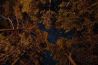 """Fire-Lit Pines and Night Sky""<br />