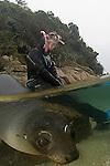 Tonga Island / NZ Seals