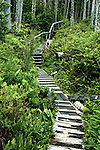 A boardwalk drops down a rainforest slope in He-Tin-Kis Park on the west coast of Vancouver Island, Canada, near Pacific Rim National Park.