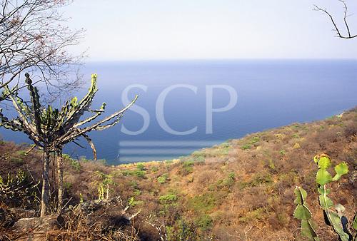 Kasanga, Tanzania. Cactus on the shore of Lake Tanganyika.