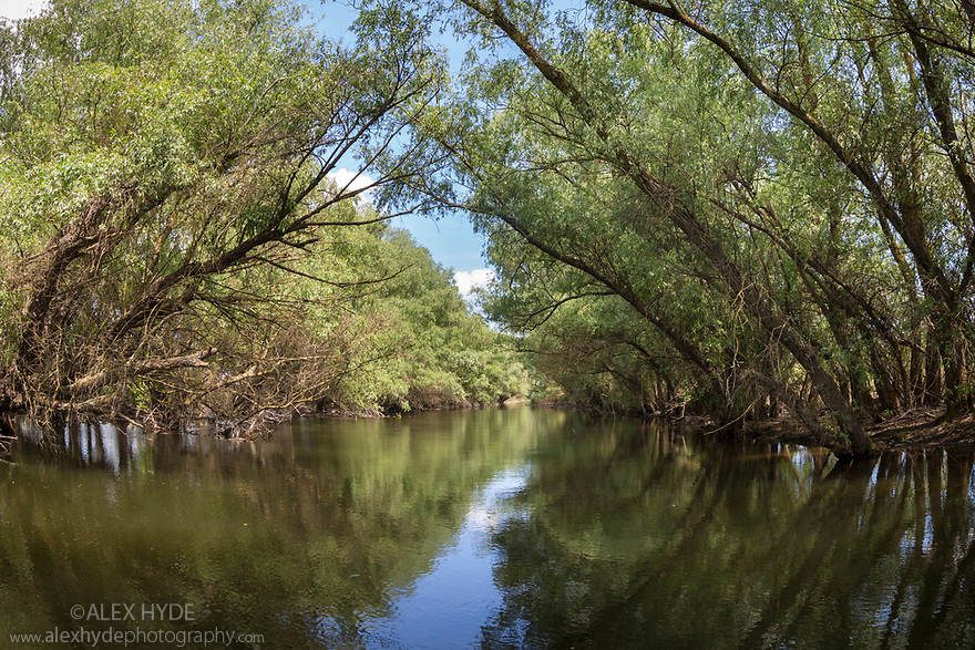 Vegetation overhanging a river in the Danube Delta, Romania. May.
