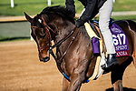 November 4, 2020: Oleksandra, trained by trainer Neil D. Drysdale, exercises in preparation for the Breeders' Cup Turf Sprint at  Keeneland Racetrack in Lexington, Kentucky on November 4, 2020. Jon Durr/Eclipse Sportswire/Breeders Cup
