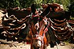 """La extracción del corcho es un recurso ancestral, que aún hoy se realiza de forma muy similar. El período de descorche debe coincidir con la máxima actividad vegetativa para que el árbol se recupere lo más pronto posible. Es llevado a cabo por cuadrillas que viven en el monte mientras dura la operación. Obreros especializados realizan la «pela» y van apilando las «panas» que serán trasladadas mediante caballería para más tarde pesarlas y clasificarlas. 19 Junio, 2007. (c) Pedro ARMESTRE..The extraction of the cork is an ancient remedy that is still done very similar. Uncorking the period must match the maximum vegetative activity so that the tree will recover as soon as possible. Is carried out by gangs who live in the bush for the duration of the operation. Skilled workers made the """"pela"""" and pile up the """"panas"""" that cavalry will be moved later by weighing and sorting. On Juny 19, 2007. (c) Pedro ARMESTRE.."""