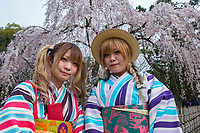 Japan, Kyoto. Japan, Kyoto. Two women in striped kimonos enjoying the cherry blossoms in Kyoto Gyoen National Garden. Model released
