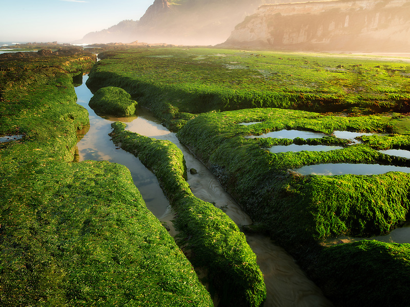 Sea grass at low tide at Devil's Punchbowl State Natural Area. Oregon