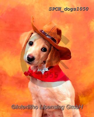 Xavier, ANIMALS, REALISTISCHE TIERE, ANIMALES REALISTICOS, dogs, photos+++++,SPCHDOGS1050,#a#, EVERYDAY