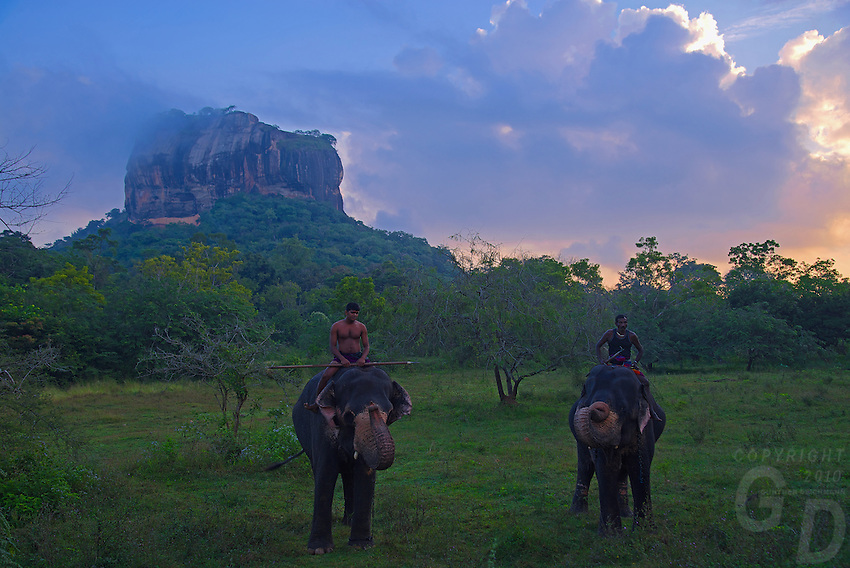 First light at the famous archaeological site Sigiriya, this place is a unique witness to the civilization of Ceylon during the years of the reign of Kassapa I. <br /> <br /> At sunrise Mahuts take their Elephants for a bath to the nearby stream or lake traveling past the majestic Sigiriya Rock shrouded in the morning clouds.<br /> <br /> Sigiriya (Lion Rock is an ancient palace located in the central Matale District near the town of Dambulla in the Central Province, Sri Lanka. The name refers to a site of historical and archaeological significance that is dominated by a massive column of rock nearly 200 metres (660ft) high.<br /> <br /> The ruins of the capital built by the parricidal King Kassapa I (477–95) lie on the steep slopes and at the summit of a granite peak. The 'Lion's Rock', which dominates the jungle from all sides showcases also a series of galleries and staircases emerging from the mouth of a gigantic lion constructed of bricks and plaster.<br /> Sigiriya today is a UNESCO listed World Heritage Site.