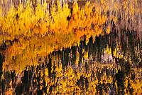 Reflection, Crystal Lake, Ouray, Colorado.
