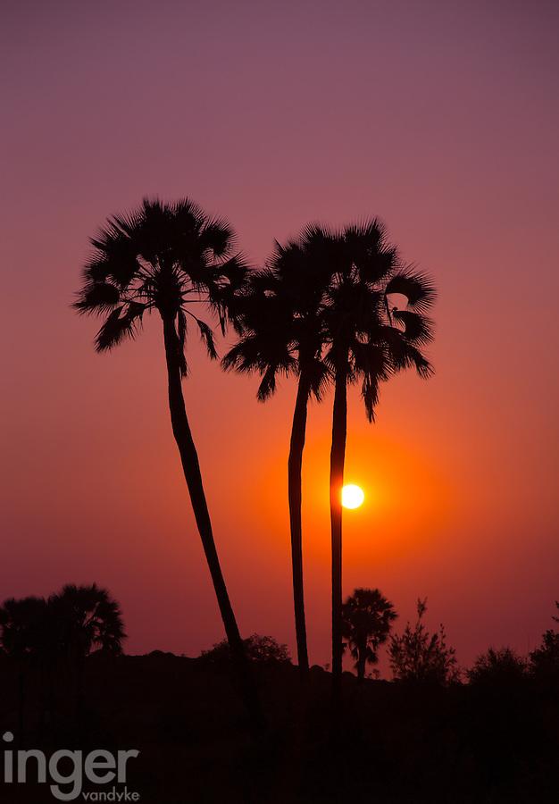 Makalani Palm Sunset at Palmwag Concession in Namibia