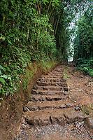 Uphill steps on the trail to Manoa Falls, Honolulu, O'ahu.