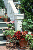 Stepside container planting in pots Solenostemon coleus, annual geraniums, near house stairs, with lighting on column pole