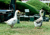 A couple of tough birds check out the old infield scratch board before the 4th race on Thursday.