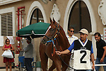 """DEL MAR, CA  JULY 30: #2 Stellar Wind leaves the Receiving Barn before the Clement L. Hirsch Stakes (Gl) """"Win and You're in Breeders' Cup Distaff Division"""" at Del Mar Turf Club in Del Mar, CA on July 30, 2016. (Photo by Casey Phillips/Eclipse Sportswire/Getty Images)DEL MAR, CA  JULY 30: #2 Stellar Wind with Victor Espinoza beat Beholder and Gary Stevens in the Clement L. Hirsch Stakes (Gl) """"Win and You're in Breeders' Cup Distaff Division"""" at Del Mar Turf Club in Del Mar, CA on July 30, 2016. (Photo by Casey Phillips/Eclipse Sportswire/Getty Images)"""
