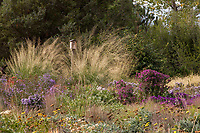 Sporabolus wrightii (giant Sacaton) and birdhouse Prairie garden meadow; Scripter garden, Colorado; design Lauren Springer Ogden