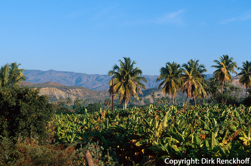 Dominikanische Republik, Banaenplantage  am Lago Enriquillo