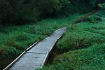Forest Setting With Wooden Bridge Across Marsh