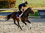 January 21, 2021: Breaking the Rules exercises as horses prepare for the 2021 Pegasus World Cup Invitational at Gulfstream Park in Hallandale Beach, Florida. Scott Serio/Eclipse Sportswire/CSM