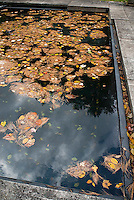Fallen leaves on top of swimming pool