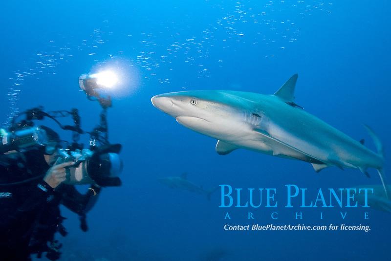 Diver photographs carribean reef shark, Carcharhinus perezii, in the Bahamas, Caribbean, Atlantic