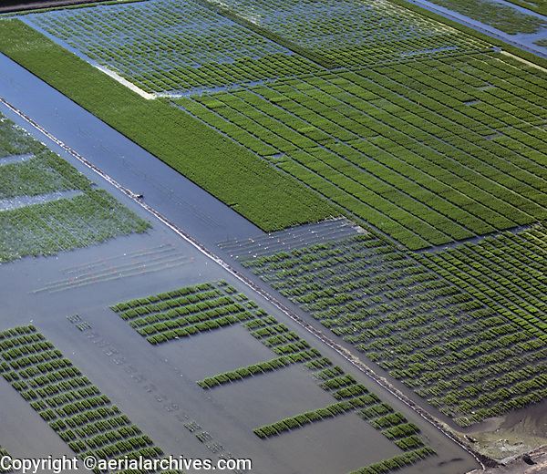 aerial photograph of rice farming and irrigation in the California Central Valley