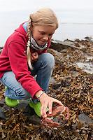 Mädchen, Kind mit einem Taschenkrebs, Taschen-Krebs an der Meeresküste im Felswatt, Fels-Watt, bei Ebbe, Niedrigwasser, Cancer pagurus, European edible crab, Krabbe, Knieper
