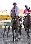 6 March 2010: Awesome Act and jockey Julien Leparoux return after winning The Gotham at Aqueduct Racetrack in Ozone Park NY.